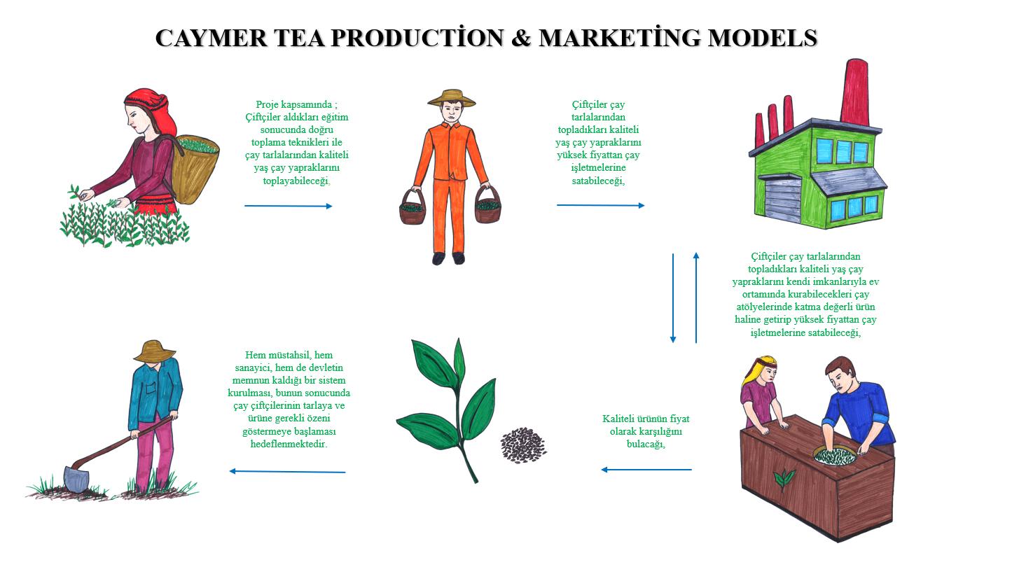 Rize Çay Araştırma Ve Uygulama Merkezi Elle Çay Yapımı